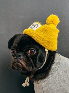 dog wearing clothing influencer